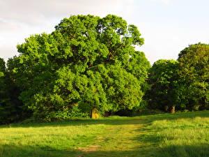 Картинки Сезон года Лето Зеленая Деревьев Природа