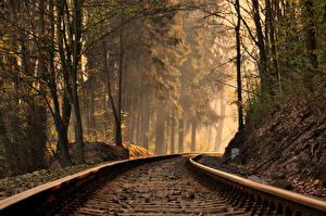 Фотография Железные дороги Леса Рельсы
