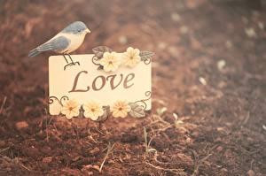 Фотографии Любовь Птицы Слово - Надпись
