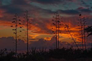 Фотографии Небо США Облака Гавайи Ночные Природа