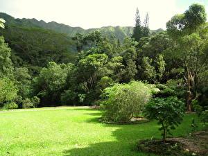 Фотография Сады США Гавайи Траве Газон Lyon Arboretum Oahu Природа