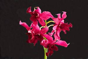 Обои Орхидеи Фиолетовые цветок