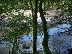 Обои Реки Англия Деревья Мха River Lerryn Природа