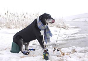 Фото Собаки Зимние Ловля рыбы Удочка Снег животное Юмор