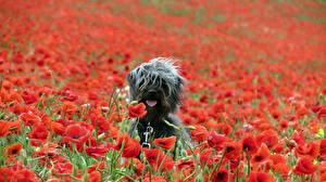 Картинки Собака Маки Животные