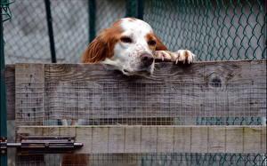 Фото Собаки Забора животное