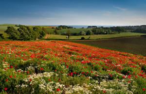 Картинки Мак Поля Англия Budleigh Salterton Цветы Природа