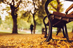 Картинка Парки Вблизи Осень Скамейка Листья Природа