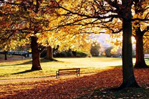 Картинка Сезон года Осенние Парки Листва Деревьев Скамейка Природа