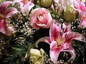 Фотография Букеты Розы Лилии Розовые Цветы