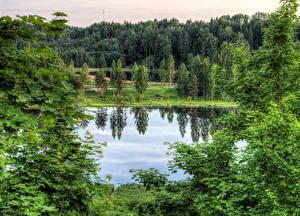 Картинки Озеро Эстония Леса HDR Rouger Природа