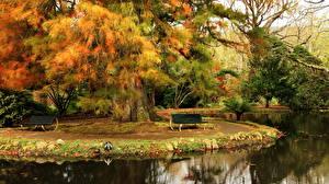 Картинки Сады Португалия Пруд Скамейка Terra Nostra Botanical Furnas Природа