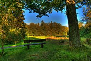 Фото Пейзаж Германия Трава Скамейка HDRI Ствол дерева Hessen Schotten Природа