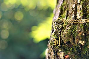 Обои Ствол дерева Природа