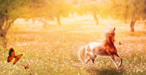 Фото Лошадь Бабочки Луга Рисованные животное