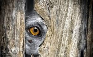 Фотография Глаза Крупным планом Смотрит Забор