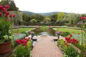 Обои Сады США Тюльпаны Пруд Ландшафт Калифорния Дизайн Filoli Природа фото