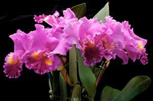 Картинка Орхидея Фиолетовая Цветы