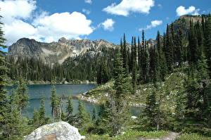 Картинки Парки Канада Лес Гора Пейзаж Ель Mount Revelstoke Природа