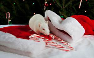 Картинка Праздники Новый год Крысы Шапки