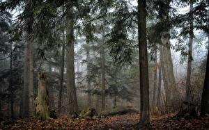 Картинки Лес Дерева Туман Пне Природа