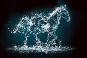 Картинка Лошади Вода Капля Брызги 3D_Графика