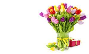 Картинки Тюльпан Ваза Лента Цветы