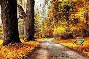 Картинка Дороги Осень Дерева Скамья Природа