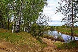 Фотография Река Россия Деревья Береза Ярославль Которосль Природа