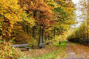 Фотография Времена года Осень Германия Деревьев Скамейка Klotten Природа