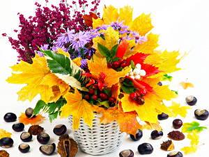 Фотография Букет Листва Клён Цветы