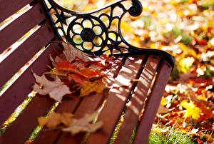 Картинка Времена года Осень Листья Скамья Клён Природа