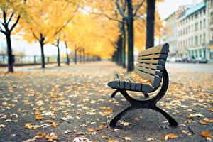 Фотография Осенние Аллея Скамья Природа Города