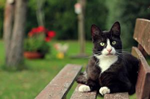 Фотографии Коты Смотрит Скамейка Животные