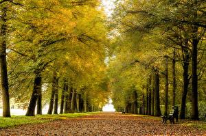 Фотографии Парки Осень Аллея Скамейка Деревья Природа