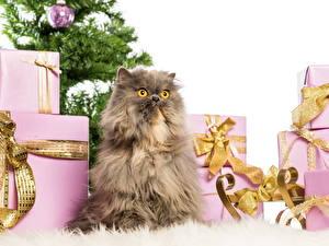 Картинка Кошки Новый год Пушистый Подарки Животные