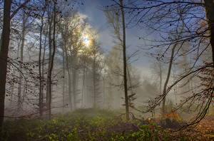 Картинки Леса Германия Эдигер-Эллер Туман Деревья Природа