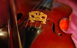 Фотография Вблизи Скрипки