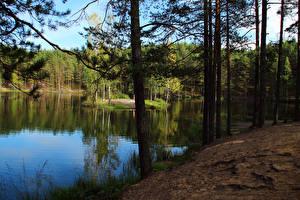 Фотография Реки Россия Дерева Семиозерье. Карельский Перешеек Природа