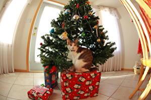 Фотографии Праздники Рождество Кошки Елка Подарки