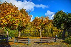 Фотография Германия Осень Реки Деревья Скамья Природа
