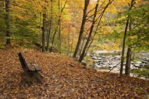 Фото Осень Речка Парки Дерево Скамья Природа