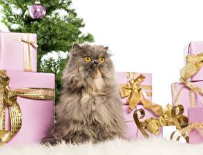 Обои Праздники Рождество Коты Подарки Животные