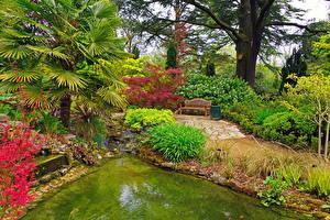 Фотография Сады Англия Пруд Скамья Пальмы Кусты Blenheim palace Природа