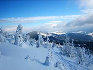 Обои Украина Времена года Зима Горы Карпаты Снег