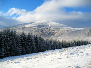 Картинка Украина Зимние Леса Горы Ель Снег Закарпатье