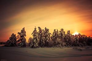 Фото Сезон года Зима Рассветы и закаты Снег Ель Природа