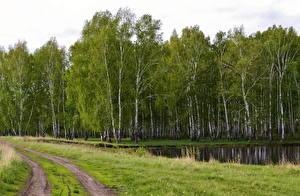 Фотографии Россия Леса Речка Дороги Траве Березы Природа