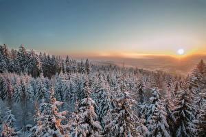 Картинки Времена года Зима Рассветы и закаты Леса Ель Снег Солнце Природа