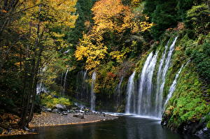 Обои США Водопады Леса Реки Вода Калифорния Mossbrae Природа фото